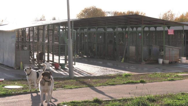 prijut dlja zhivotnyh 650x366 - Добровольцы помогают приюту для животных в Витебске (видео)