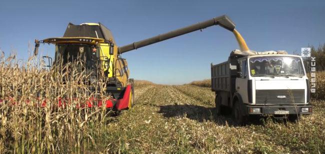 7 tysjach tonn zerna 650x308 - Экипаж комбайнеров из Оршанского района намолотил 7 тыс. тонн (видео)