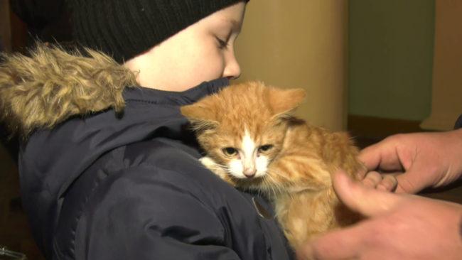 prijut 650x366 - Акция в помощь приюту для животных прошла в Витебске (видео)