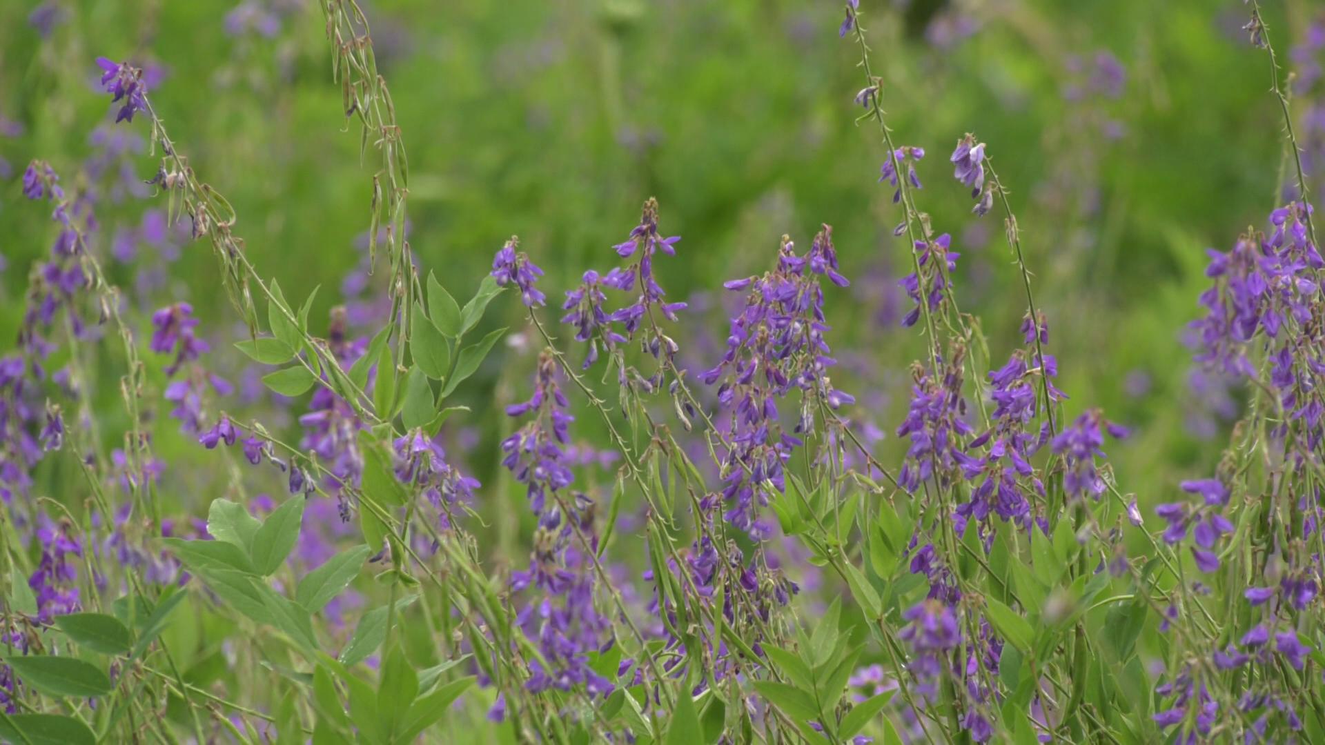 trava - Как быть успешным в агробизнесе? Шумилинский фермер Юрий Семёнов (видео)