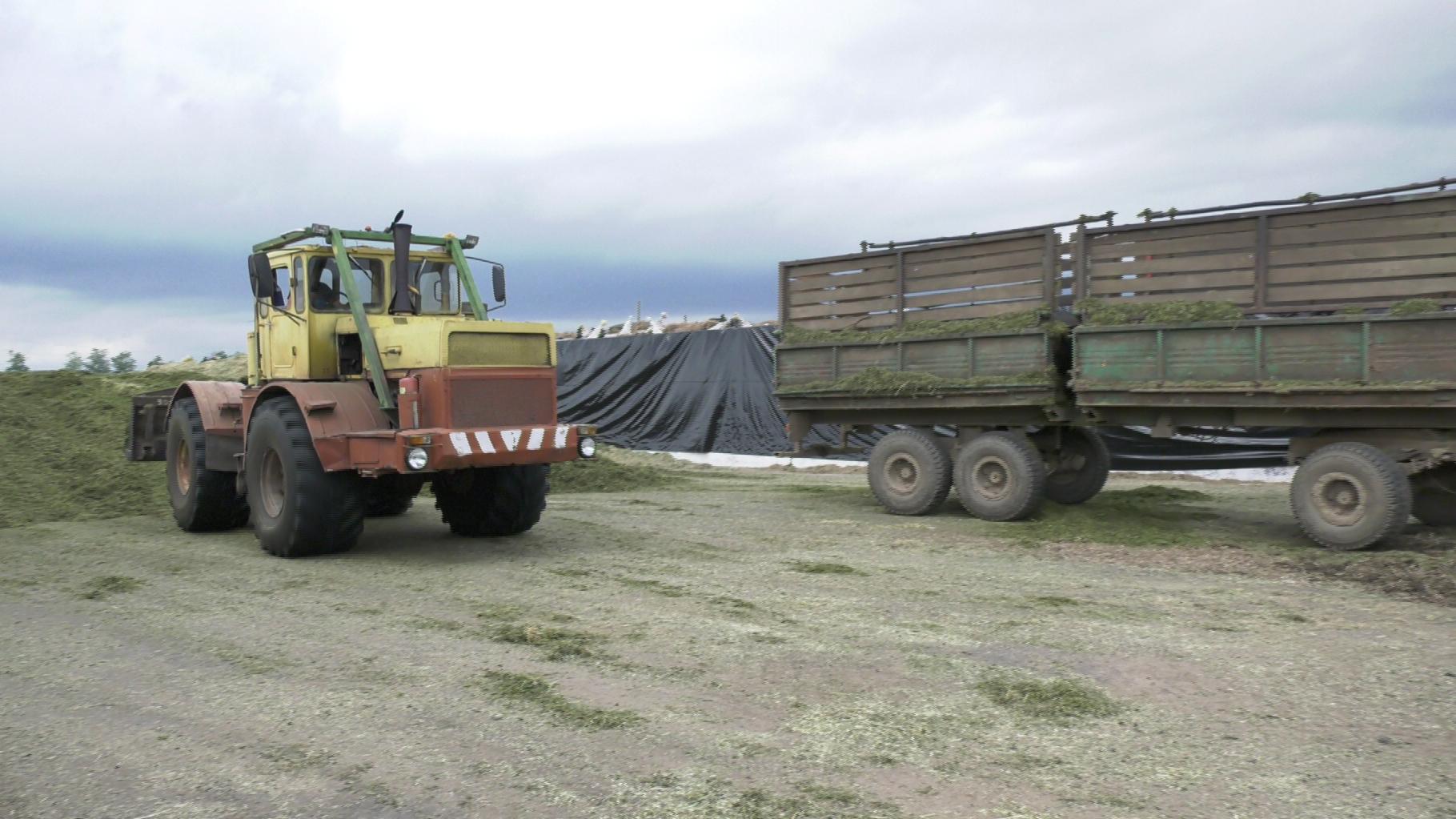 traktor - Формула успеха от «Леонишено» Верхнедвинского района (видео)