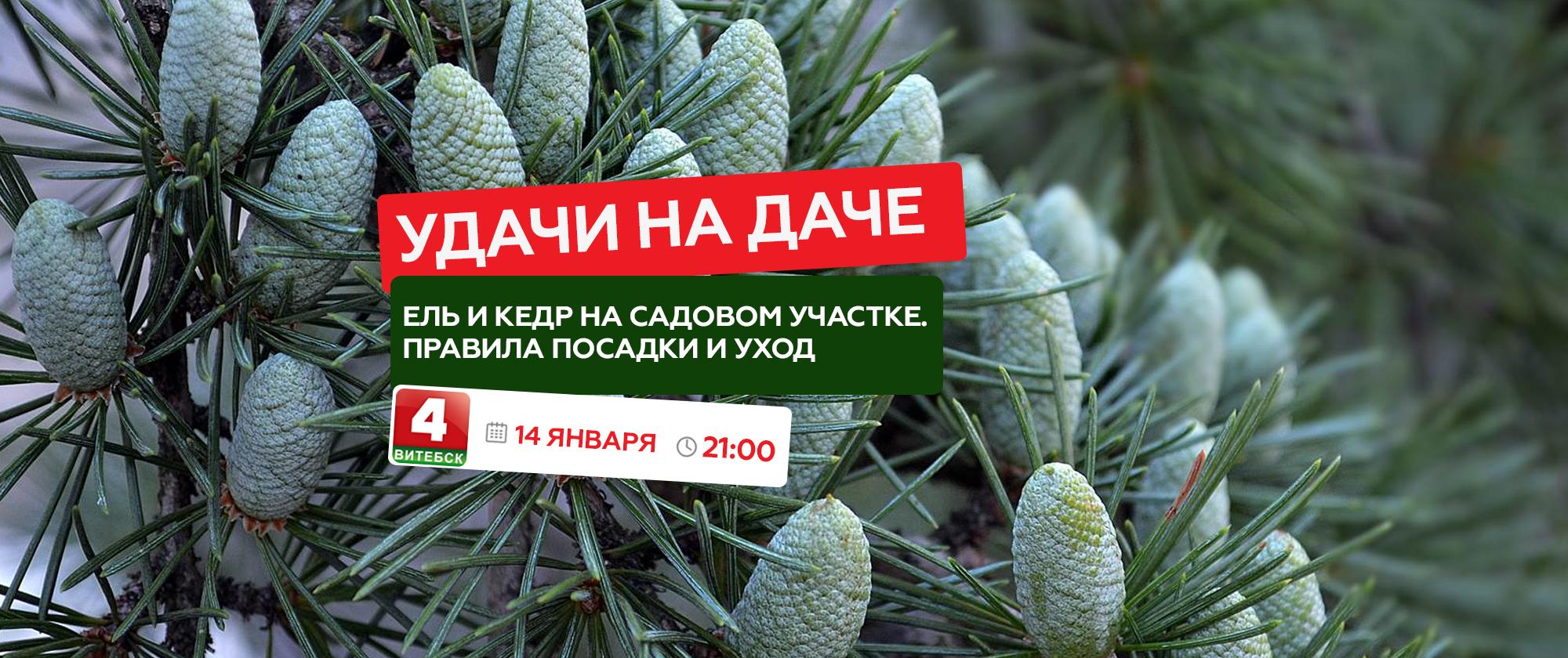 udachi na dache 14 janvarja - Удачи на даче-14-января