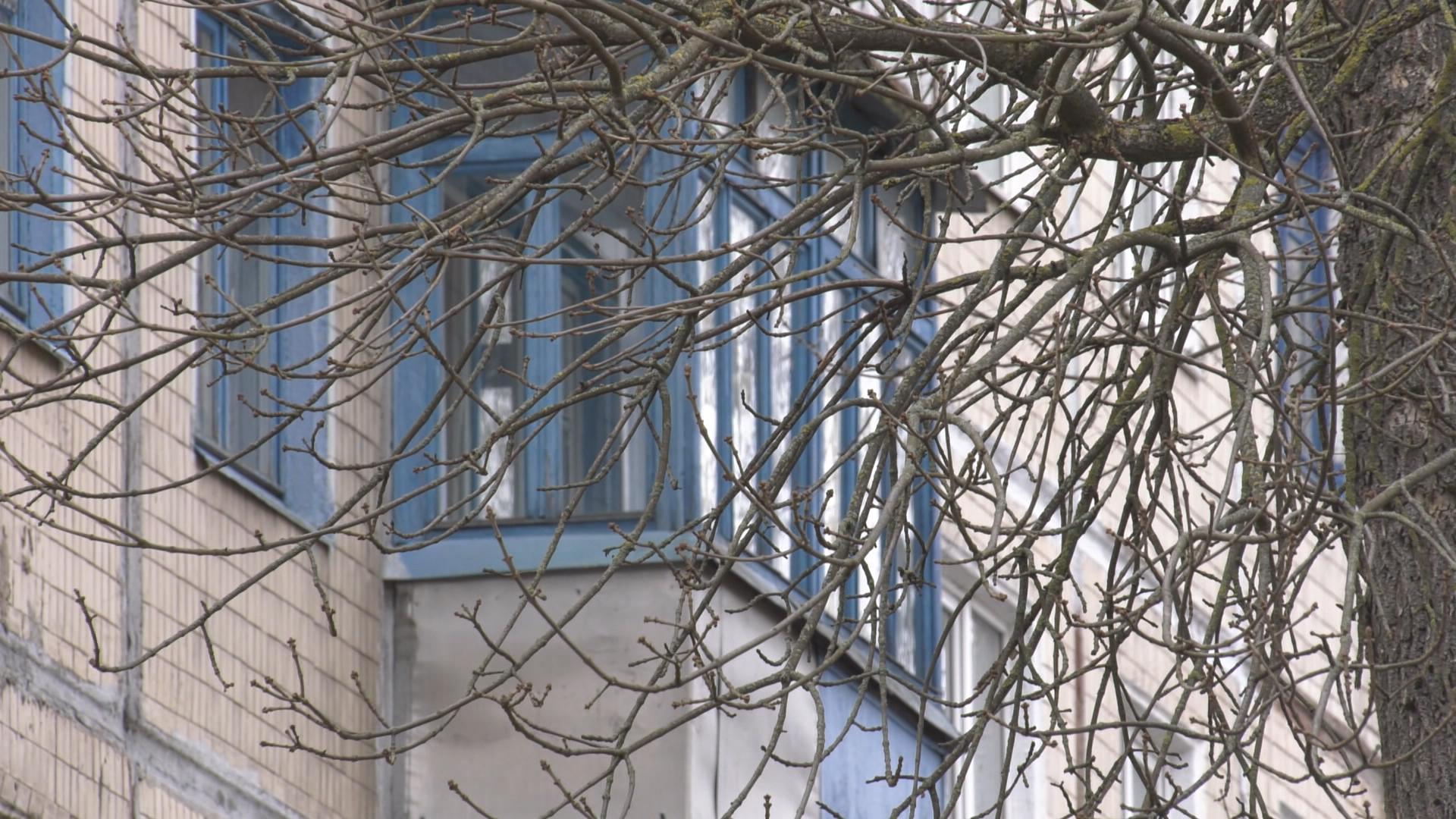 derevja - Обрезка аварийных деревьев. Как организована работа в Витебске? (видео)