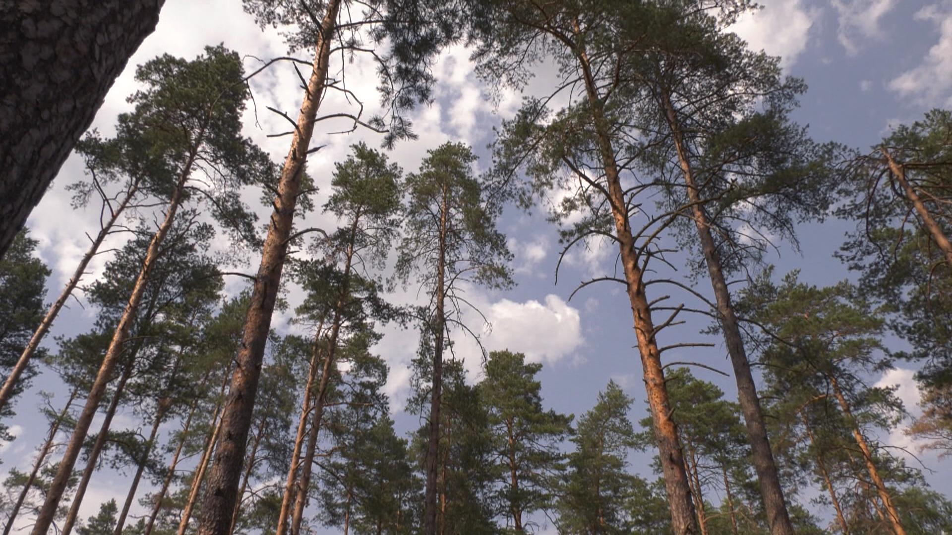 les - Запрет и ограничения на посещения лесов введены в Витебской области (видео)