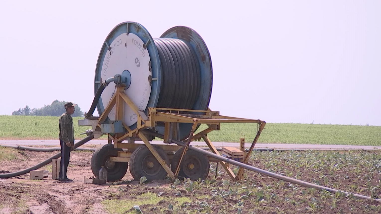 zasuha - Жара и засуха пагубно влияют на состояние зерновых на Витебщине (видео)