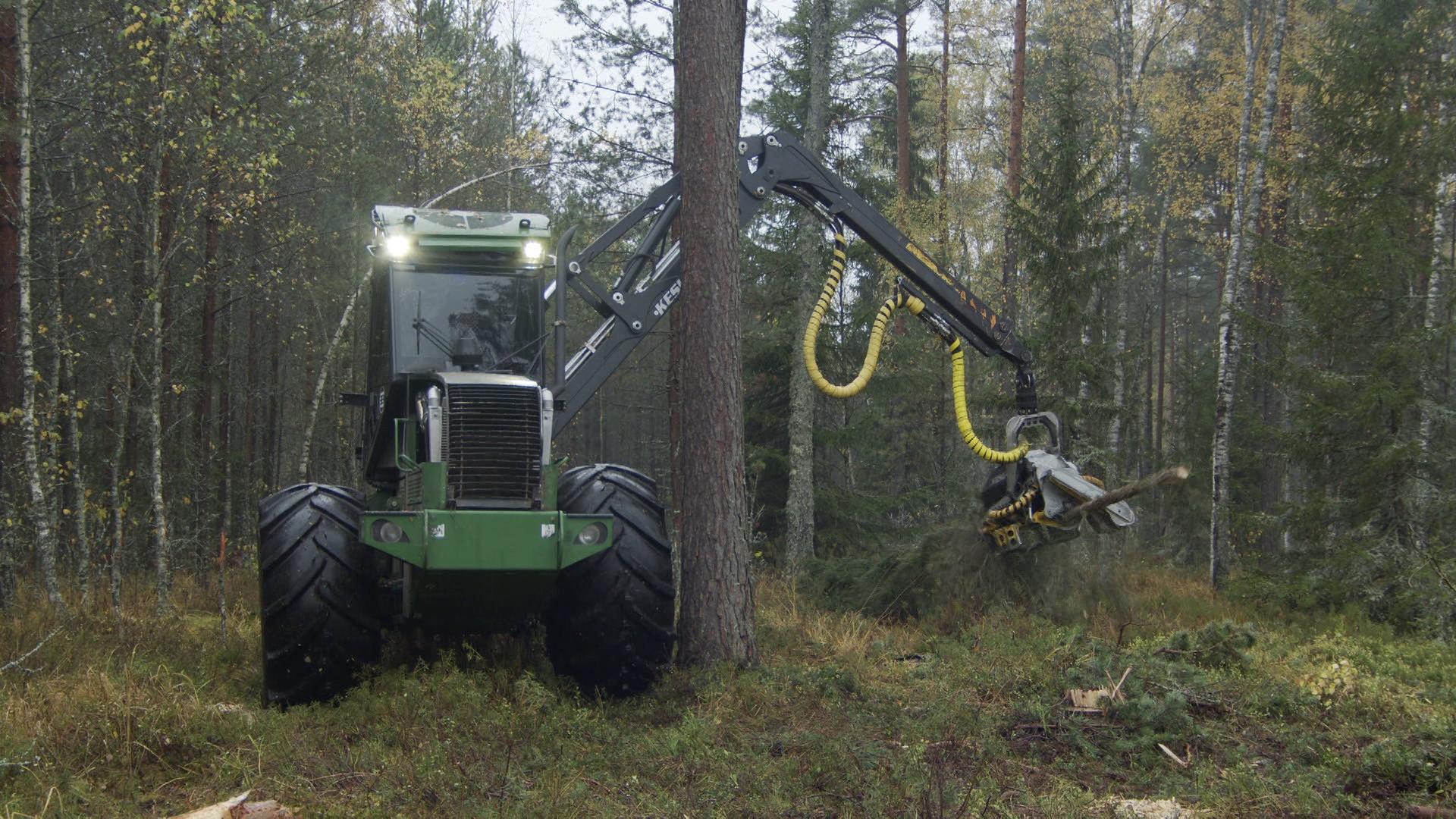 den lesa - Лучших работников леса наградили в Витебске (видео)